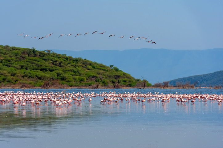 Flamants roses, Camargue